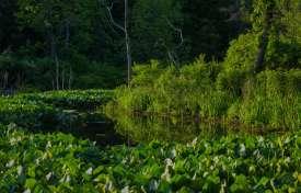 Identifying Vegetation for Wetland Delineation