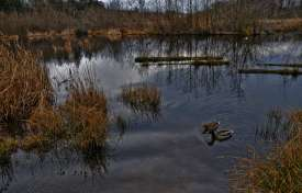 Wetland Regulation in South Carolina