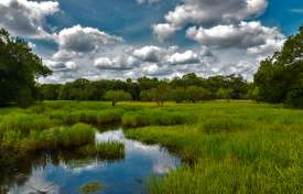 Wetland Restoration Best Practices