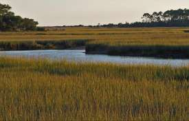 EPA's Rules on Compensatory Mitigation for Impact on Wetlands, Streams and Other Waters