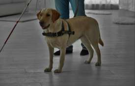 Service Animals in the Workplace: What You Need to Know